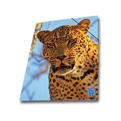 Mapa-carton-Skag-AR-inchidere-cu-elastic-25-x-35-wild-animals-leopard